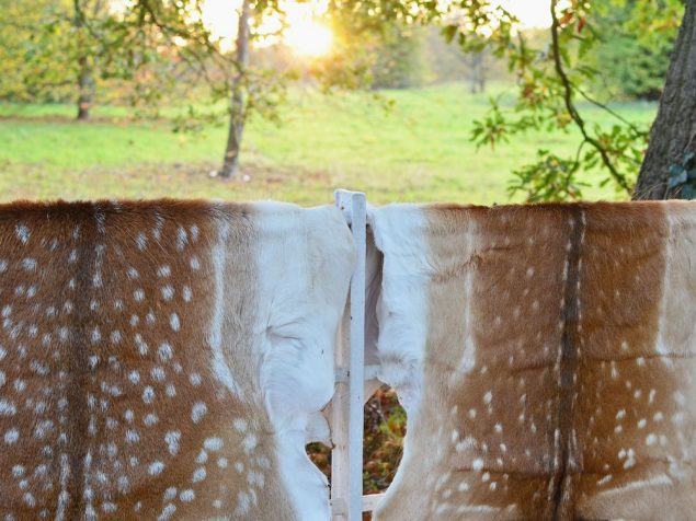 Fallow deer hides at Wild Sussex