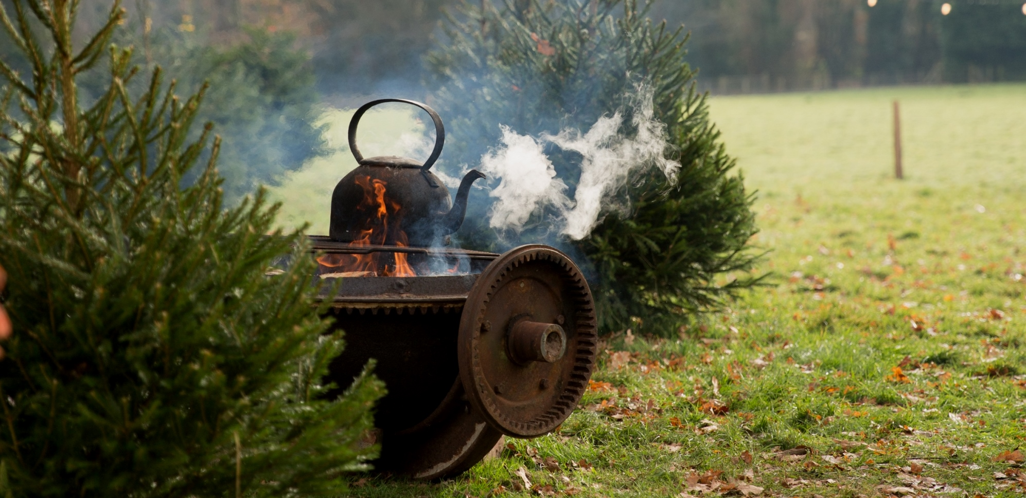 Come and choose your Christmas tree at Wild Sussex