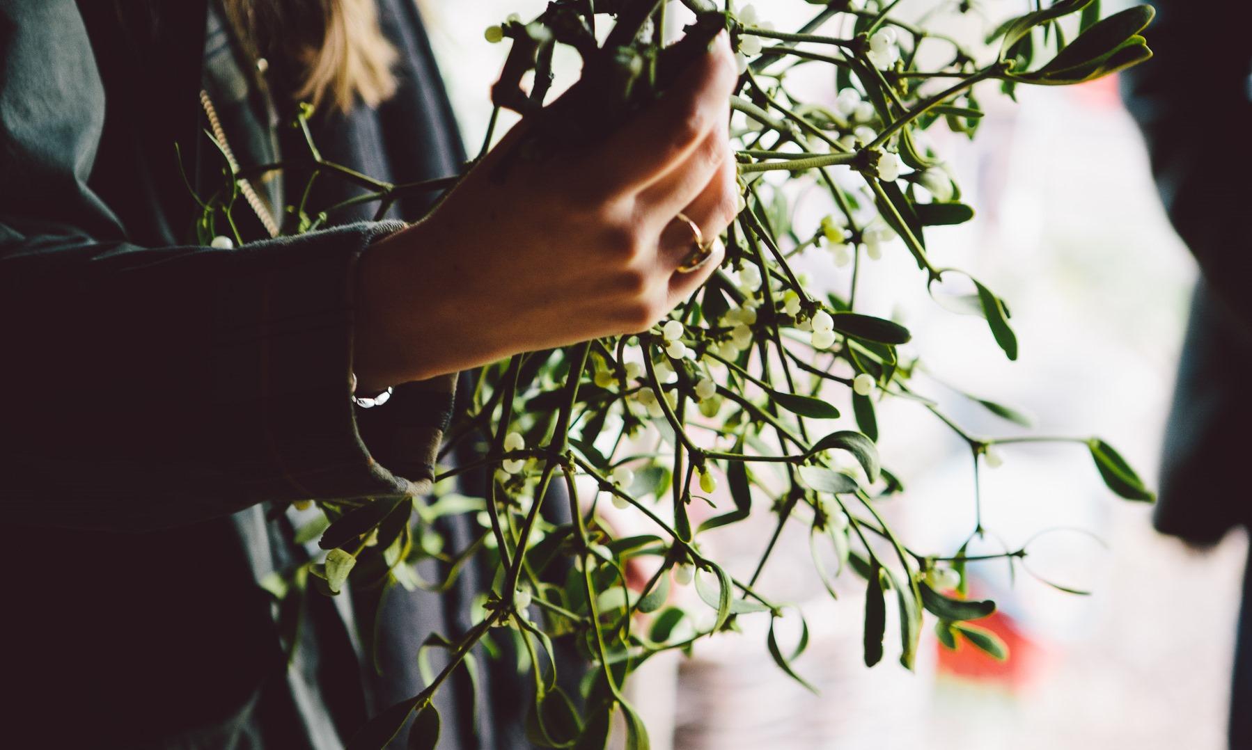 Mistletoe in the Wild Sussex Wood Yard