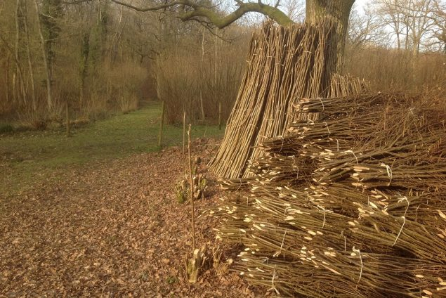 Pea sticks and bean rods