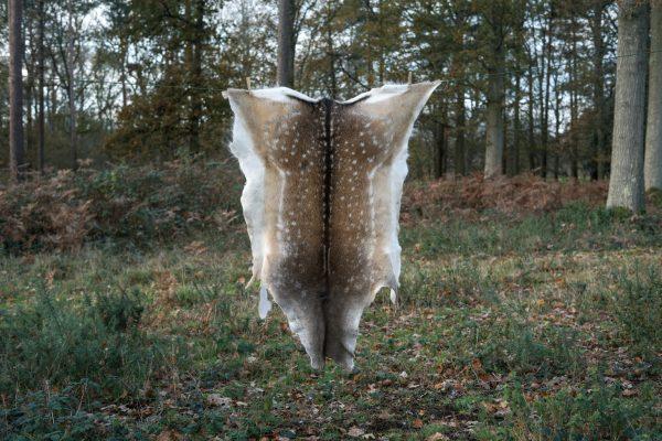 Fallow deer hide B
