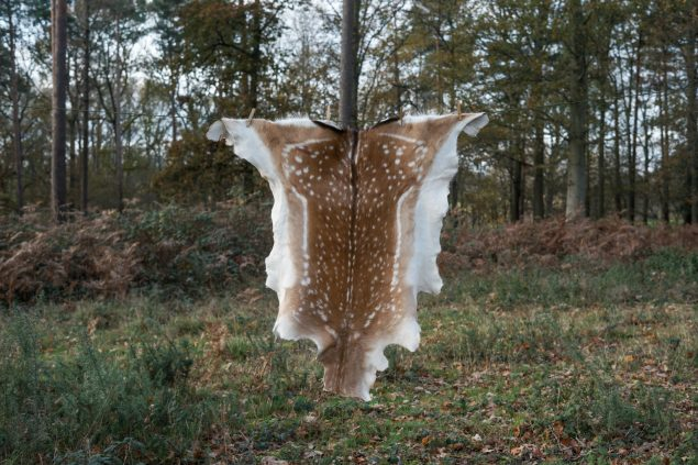 Fallow deer hide C