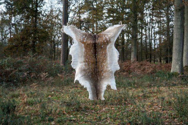 Fallow deer hide D