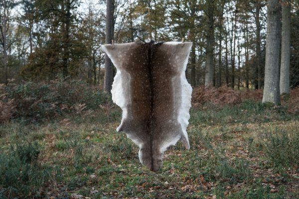 Fallow deer hide E