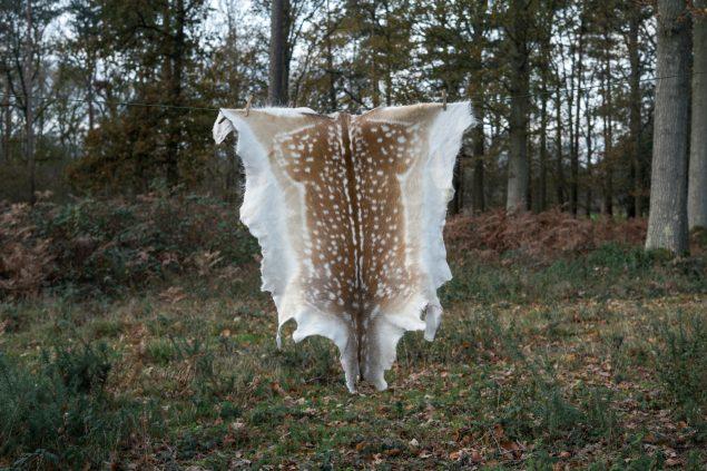 Fallow deer hide H