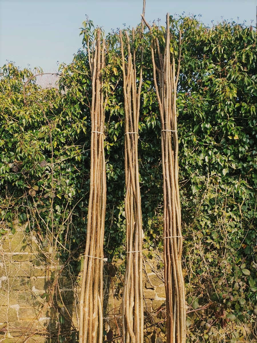 Bean rods at Wild Sussex
