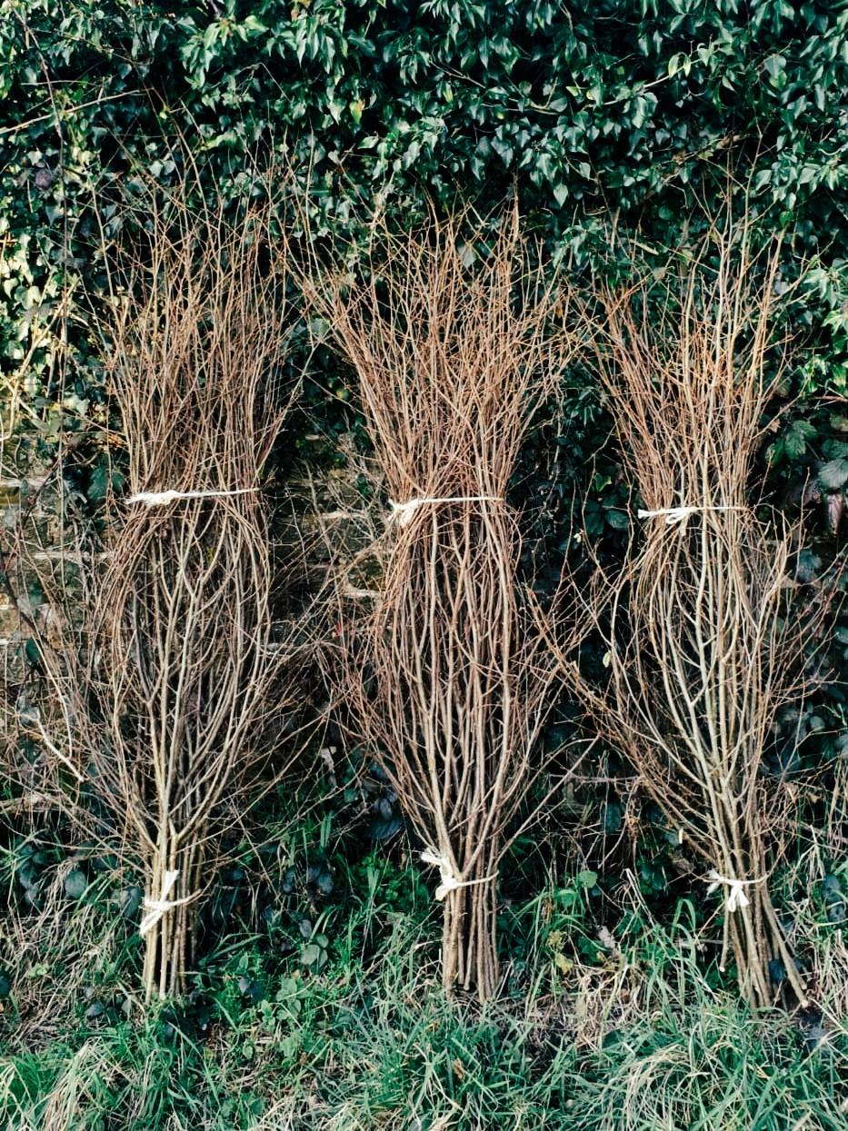 Pea sticks at Wild Sussex