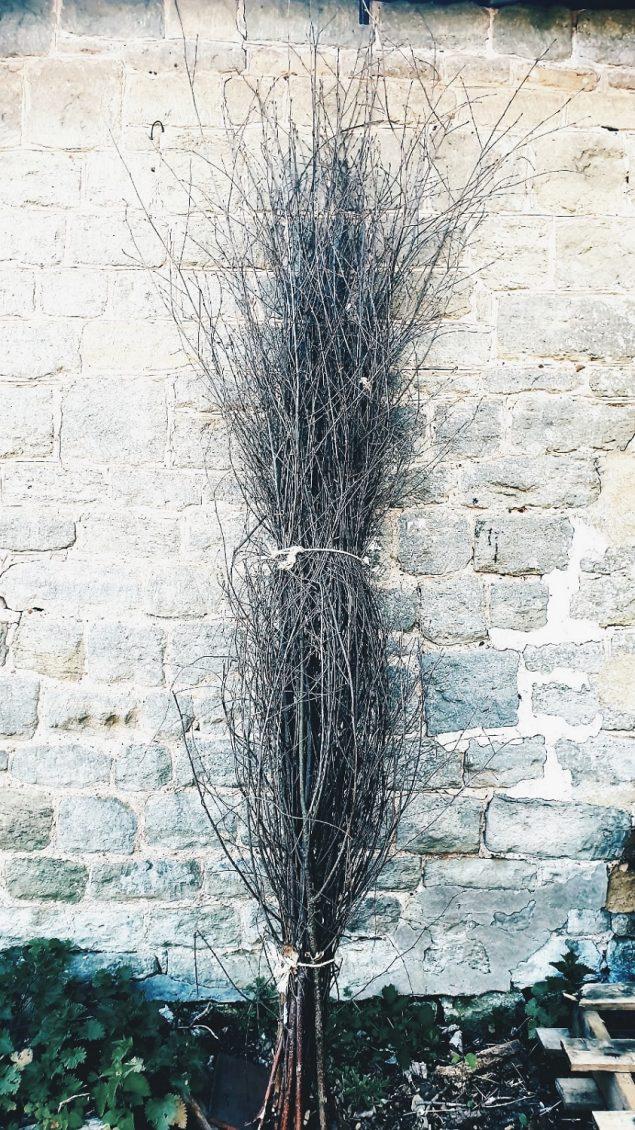 Birch pea sticks