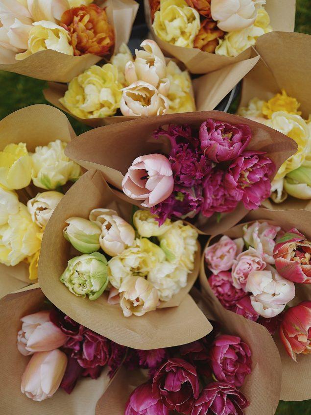 Speciality tulips